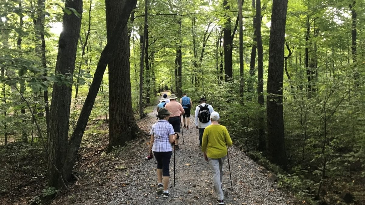group walking in the forest